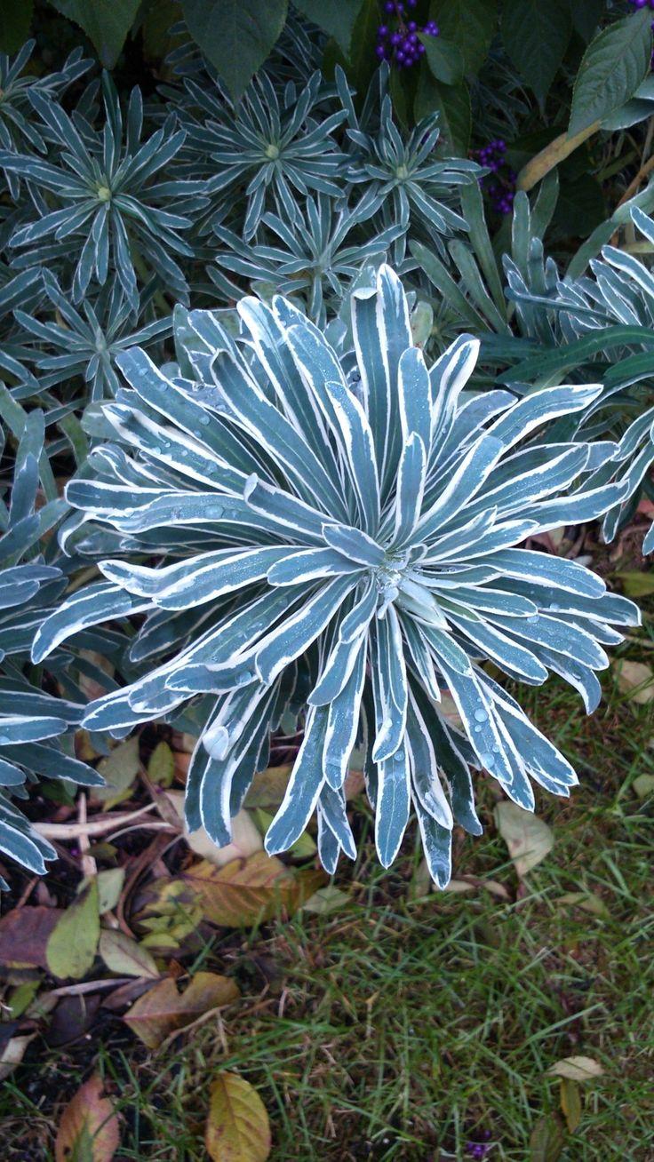 66 best statement plants images on pinterest plants flower