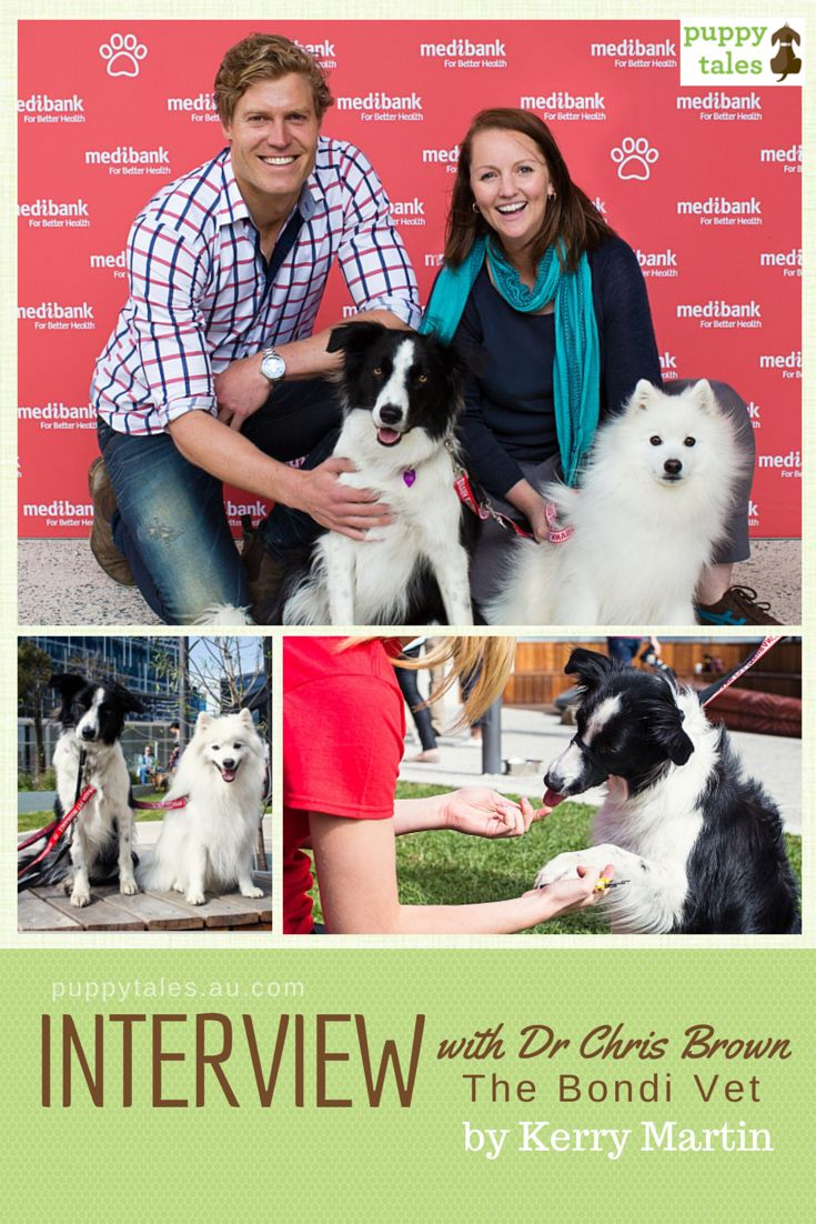 Interview with Dr Chris Brown, the Bondi Vet - a day of fun at the Dog Day Out!