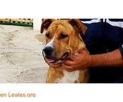ANDY PARA ADOPTAR ALBERGUE VALLE COLINO  #Adopción #adopta #adoptanocompres #adoptar #LealesOrg  Contacto y info: Pulsar la foto o: https://leales.org/animales-en-adopcion/perros-en-adopcion/andy-para-adoptar-albergue-valle-colino_i2674 ℹ  ANDY de unos 6 mesesrecuerda que sí te gusta ANDY hay que tramitar la adopción en el Albergue y después tramitar su licencia administrativa para RPPP con lo cual ya se los podrán llevar a casa.   Acerca de esta publicación:   Esta publicación NO ha sido…