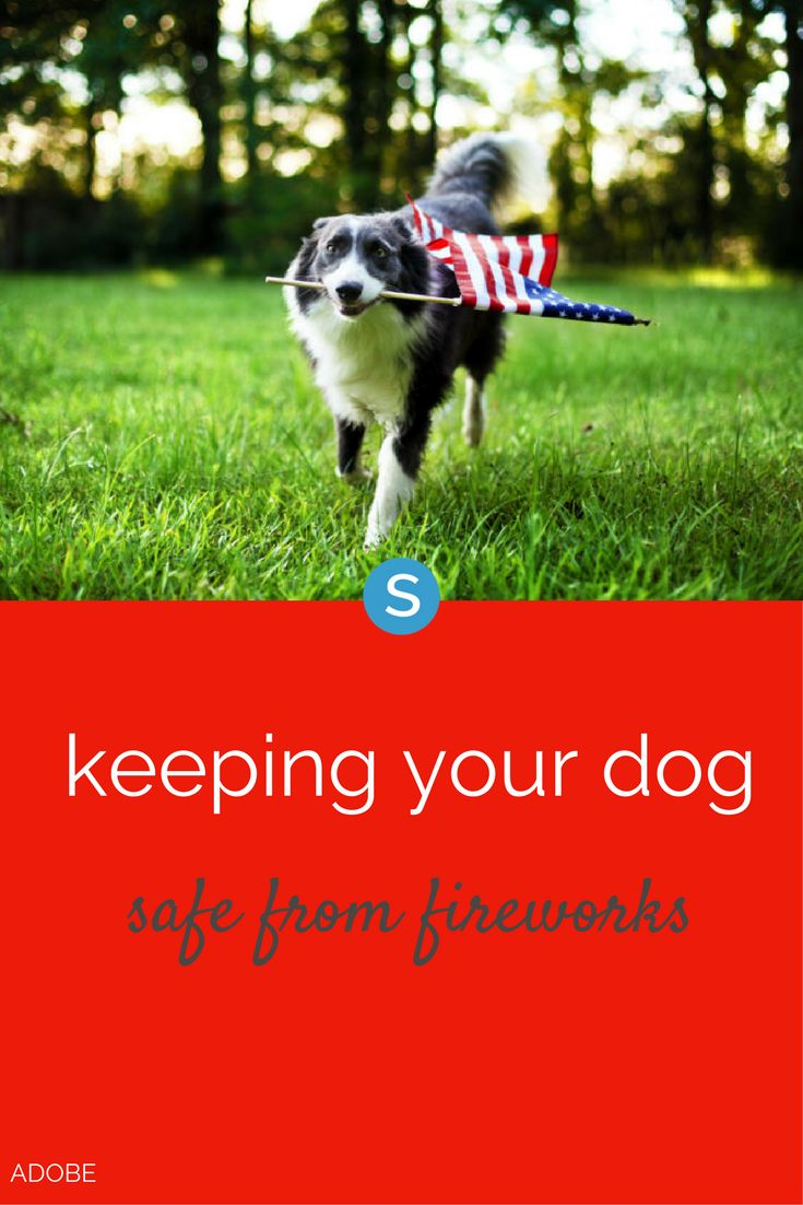 How to help your dog stay safe during fireworks and
