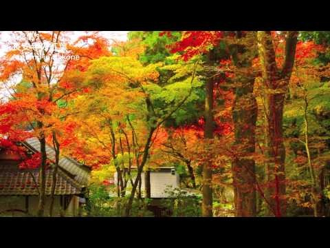 Autumn colors in Hakone