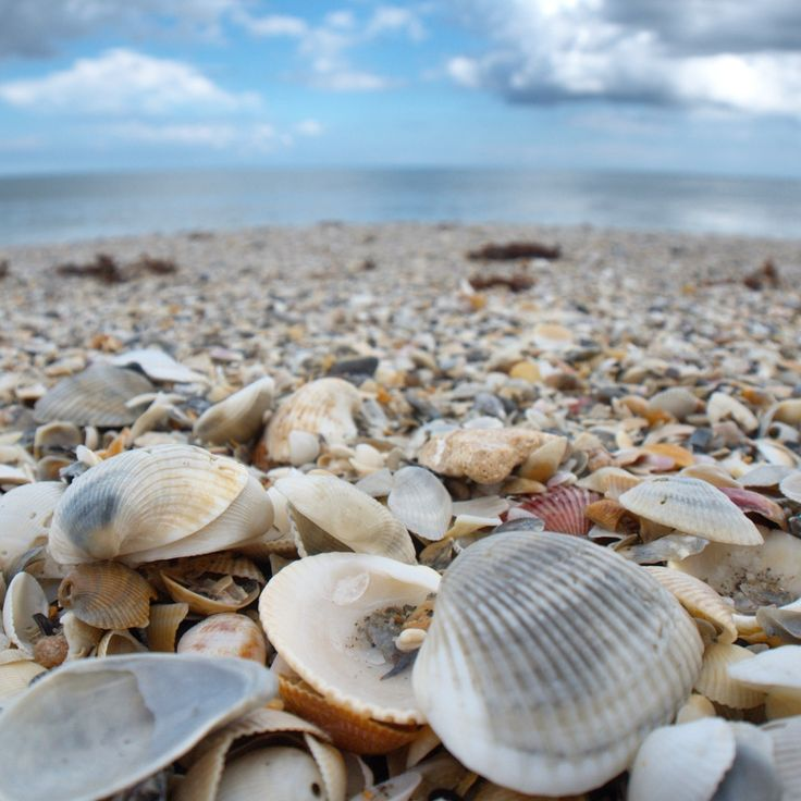 Canova Beach Park near Melbourne, Florida >>> Wow! What an awesome beach for shell hunting! Have you been?