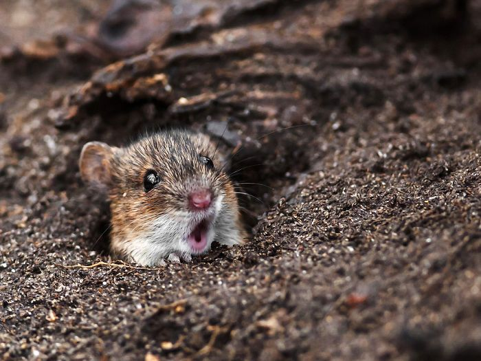Astonished Animals --- Shocked Mouse (click on the photo for more..)