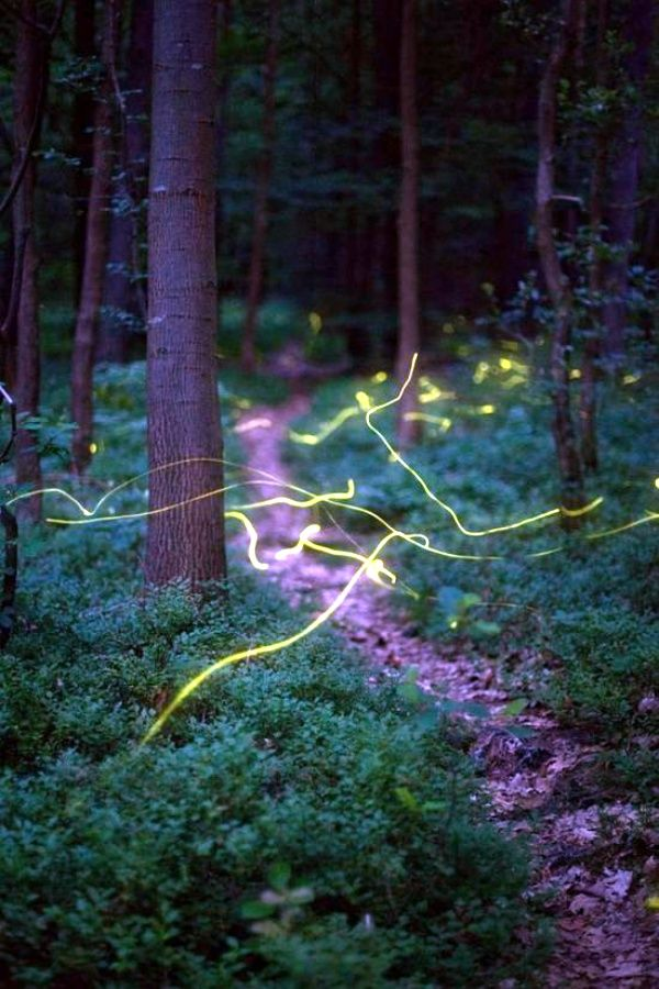 45 Fascinating Examples Of Firefly Photography