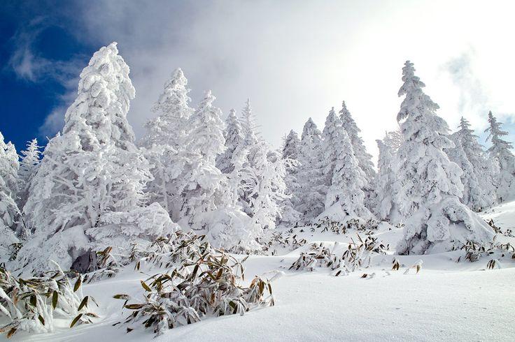 Φύση, δάσος, χειμώνας, χιόνι, ουρανό διανυσματικό