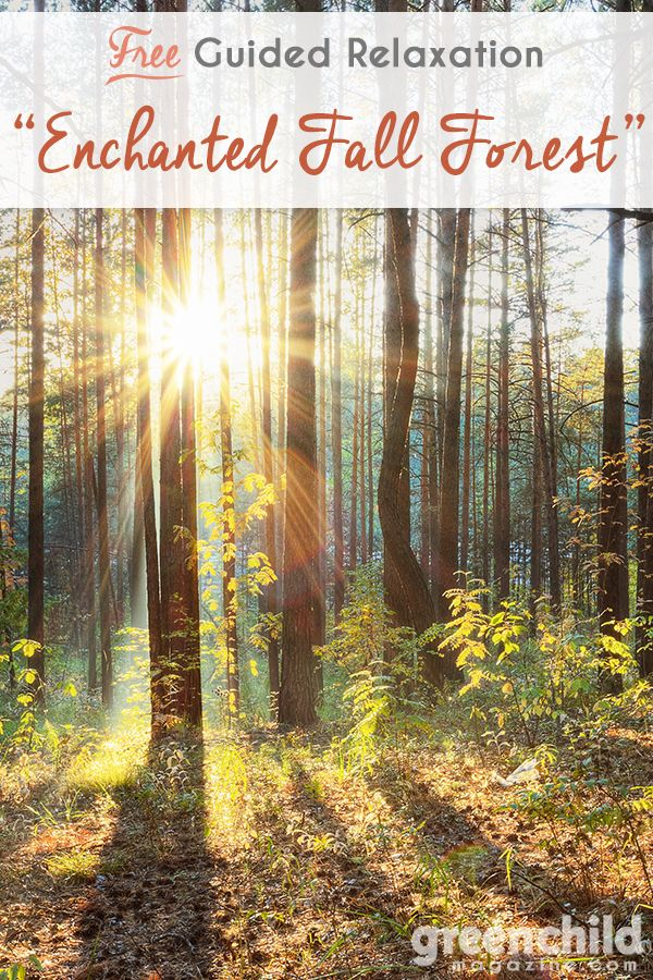 OurGuided Relaxation columnisnow available for you to download, free of charge, foryour family. These peaceful guided relaxation scripts are written by Mellisa Dormoy of Sha…