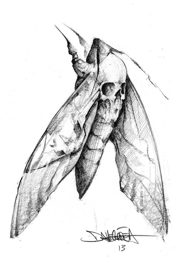 Death's Head Moth, Dave Correa #moth #deathshead #art
