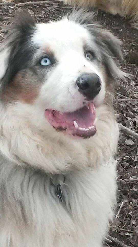 Odin almost 2 years old :)