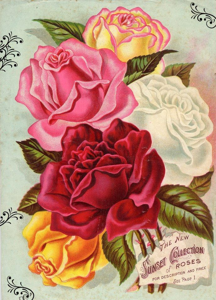 Early American Gardens: Catalogs On Seeds And Plants, Sunset Collection Of  Roses