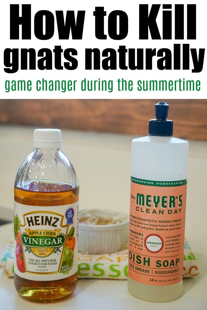 How to Get Rid of Gnats with 2 Household Items! in 2020 ...