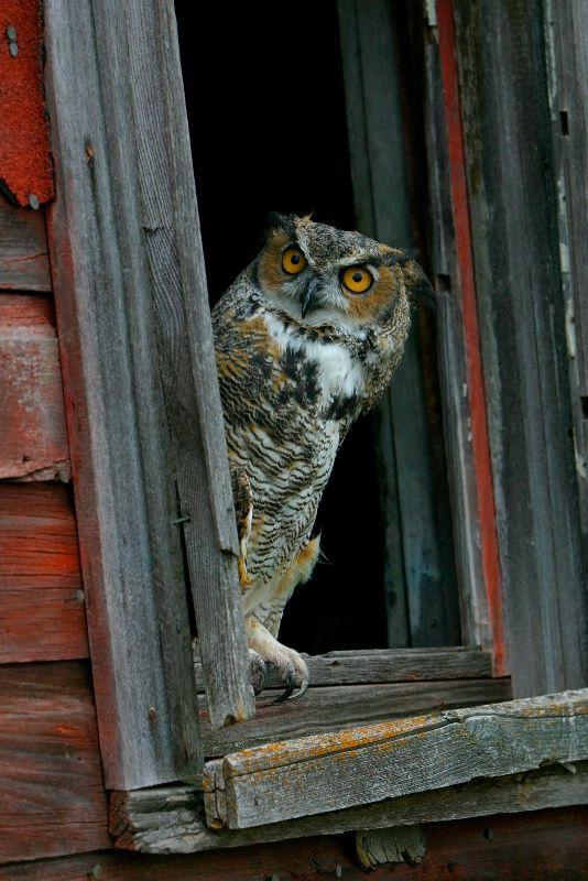 1377 Best Images About Fotos De Buhos Owl On Pinterest