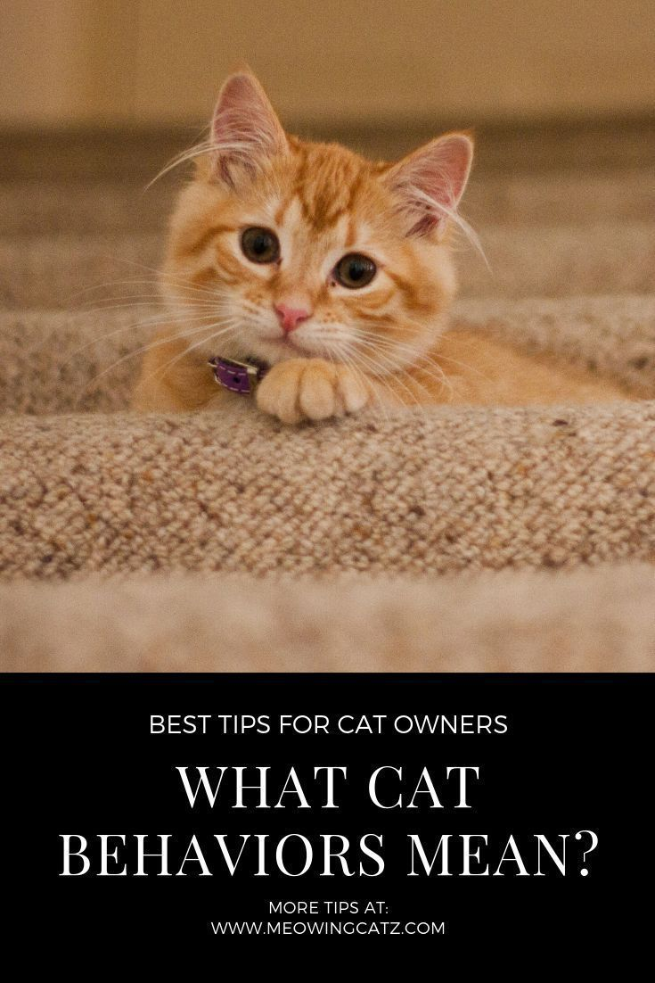 Why Do Cats Cough Up Hairballs Let S Find Out Cat Behavior What Cat Cats