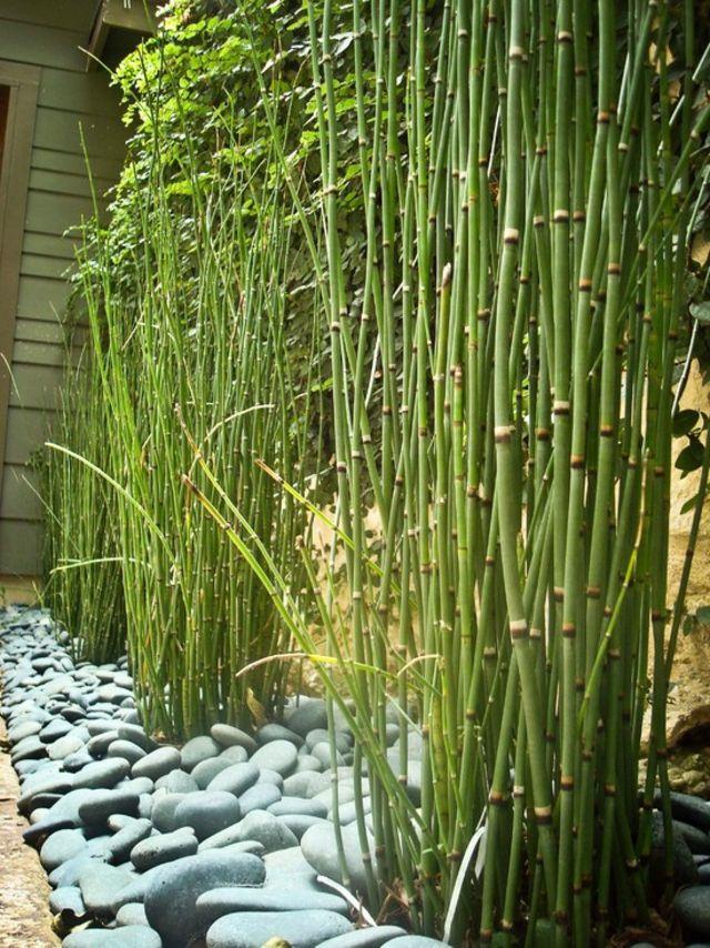 Bambou et gros galets blancs, aménagement jardin design
