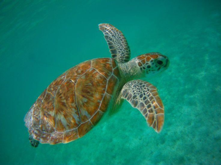Ofertas de vacaciones en la playa: Akumal - http://revista.pricetravel.com.mx/vacaciones/2015/05/30/ofertas-de-vacaciones-en-la-playa-akumal/