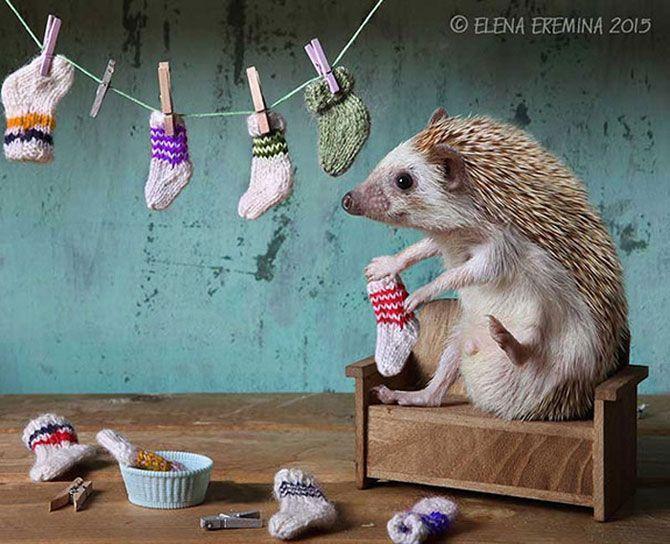 Тайная жизнь ёжиков: очаровательные фотографии от российской фотохудожницы
