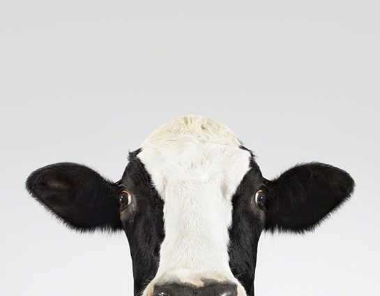 Who doesn't love a bit of cow?