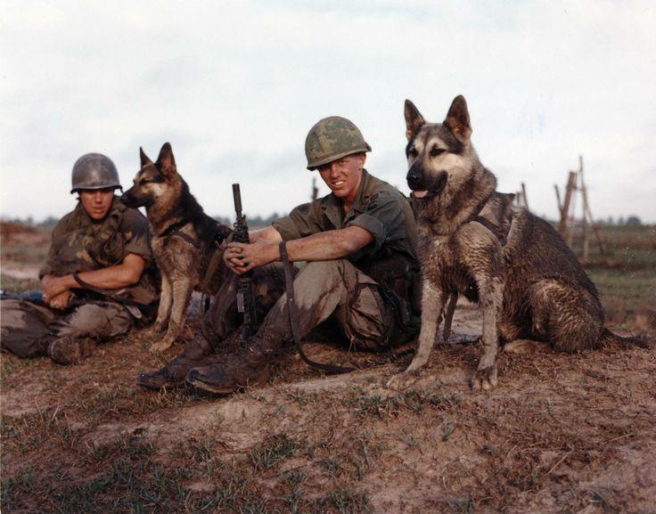 War Dogs in Vietnam