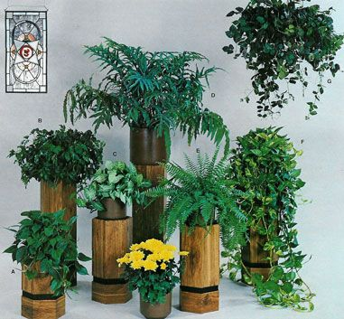 Low light botanical common names a philodendron for Low maintenance indoor hanging plants