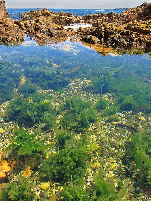 tide pools in Cape Town, by mflahertyphoto #Flickr