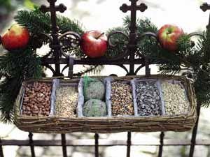 Vögel richtig füttern mit Vogelfutter-Station für den Balkon
