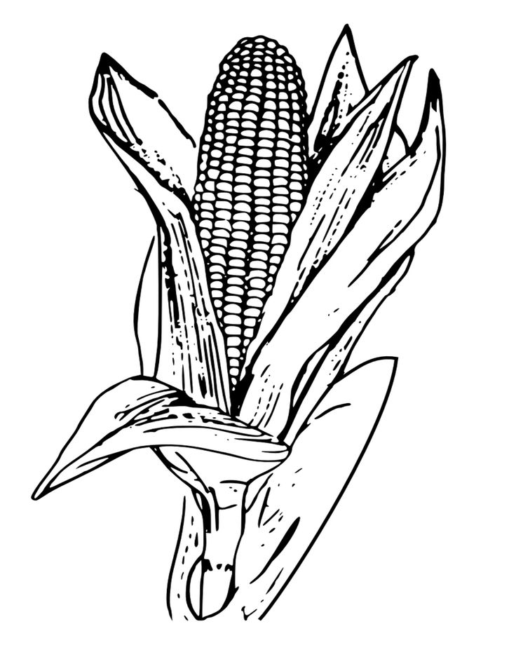 Corn on The Cob Coloring Page Thanksgiving coloring