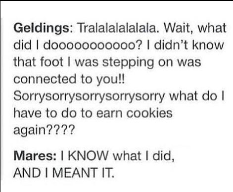 The difference between geldings and mares, very accurate   yea I have a gelding but I ride my friends mares that's so true