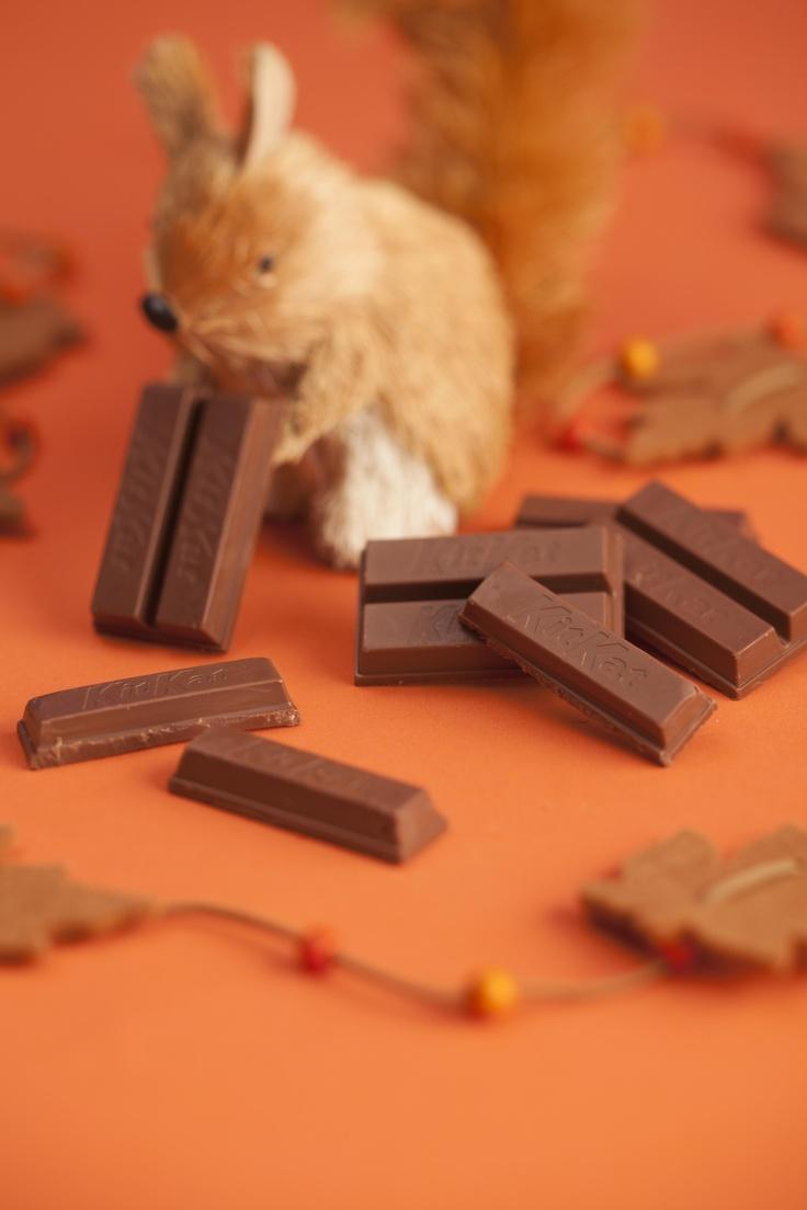 リスのキットカット拾い/Kit Kat(ネスレ日本)
