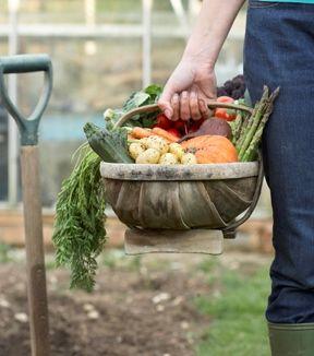 Sustainable Vegetable Garden Preparation