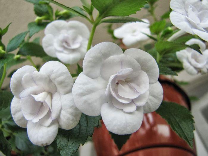 Micul Paradis -  din pasiune pentru flori