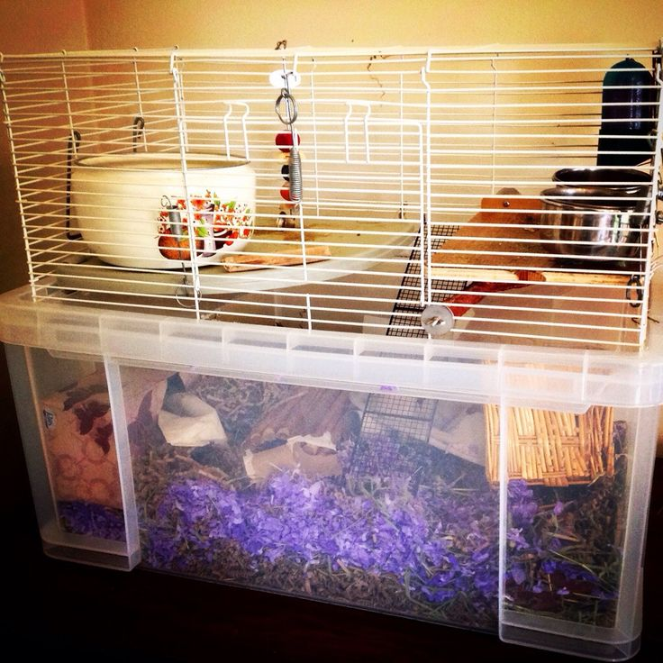 14 best images about gerbils on pinterest glass curio for Ikea hamster cage