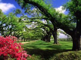 Beautiful Nature Wallpaper 3 in HD