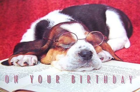 Kartka urodzinowa Basset Style
