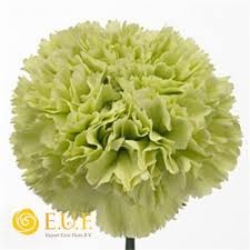 Carnation Goblin (apple green flower), bride bouquet, usher buttonhole and pew end