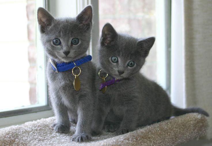 Русские клички для котов » Клички.ру - клички для собак, клички для котов и кошек!