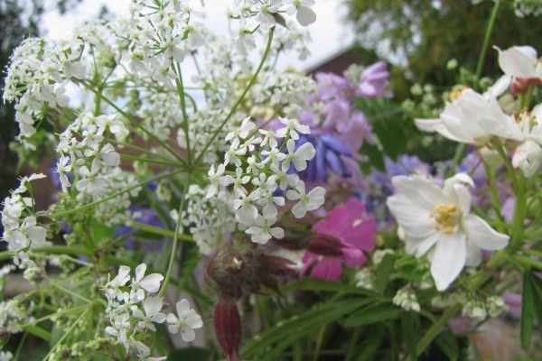 Some truly British summer time flowers. Cow Parsley, Bluebells and Red Campion