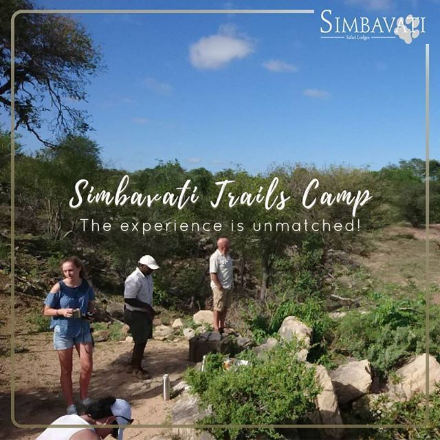 When staying at Simbavati Trails Camp days start with a /- 4-hour walk at a leisurely pace with an armed specialist guide. The experience is unmatched! Youll hear better smell more and slowly train your eyes to see more afar. . . . #Simbavati #SimbavatiSafari #AfricanSafari #Trails #Walking #Adventure #SimbavatiTrailsCamp #Camp #Wildlife  #Hiking