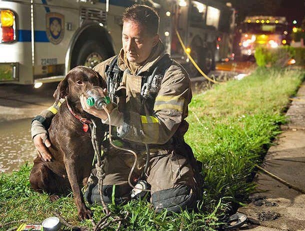 bless this man, giving oxygen to the dog!