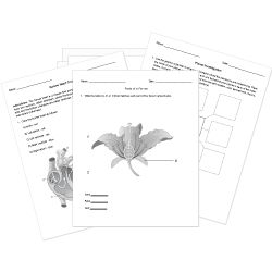 116 best Free Printable Worksheets images on Pinterest