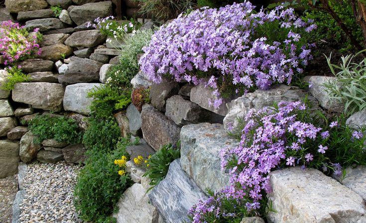 das alpinarium ist eine sonderform des steingartens in den mageren b den zwischen. Black Bedroom Furniture Sets. Home Design Ideas