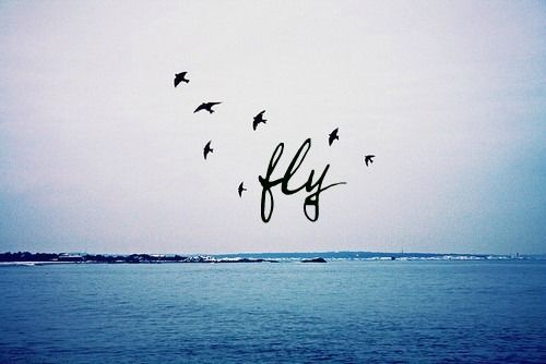 Fly Birds Sky Ocean Blue Sea Waves Quotes Quote Words Word