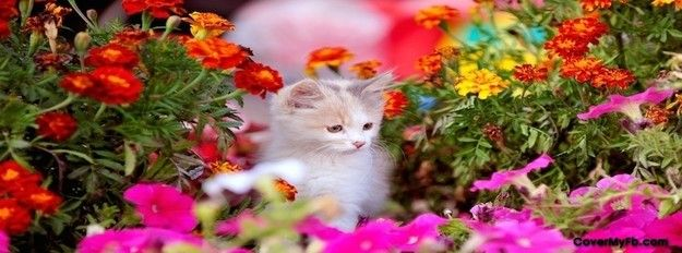 Cute Kitten in Flowerbed Facebook Cover