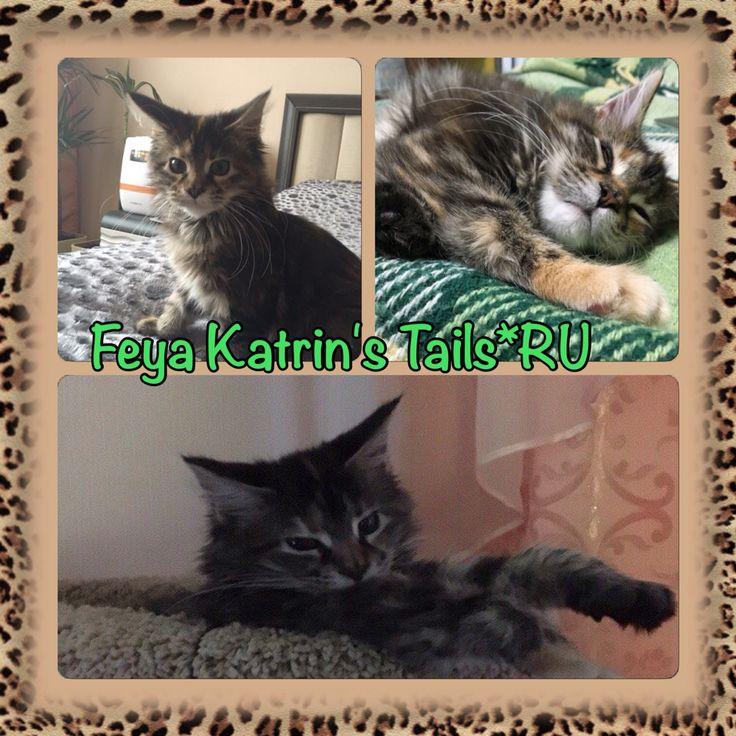 Feya Katrin's Tails*RU наша выпускница 3,5 месяца