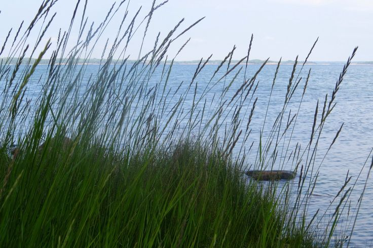 The sea shore in the summer