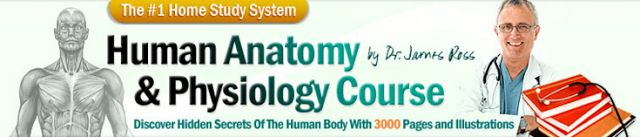 humain anatomy& physiology course  Hi  CLICK RIGHT HERE  Dear FriendAre you looking to learn anatomy and physiology?  You're about to discover the mostspectacular gold mineof human anatomy & physiology materials and diagrams ever created for commercial sale.  I'm about to share with youeverything you'll ever need to knowabout human anatomy physiology and drug therapy complete with diagrams courses lesson plans quizzes and solutions. I'll provide aneffective and painless wayto learn or review…