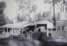 Deep in the heart of the Pilliga Forrest there is a former village of national significance that many people wouldn't know about, Wooleybah. The Wooleybah Sawmill and Settlement is one of the last remaining intact examples of a bush sawmill in the Pilliga scrub. The sawmill was established in the 1930s by the Underwood family and is a demonstration of the history of forestry operations in the Pilliga and regeneration management practices of the early years.
