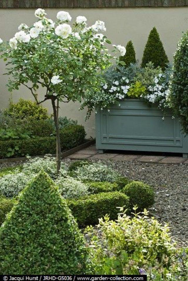 formal boxwood & white standard roses