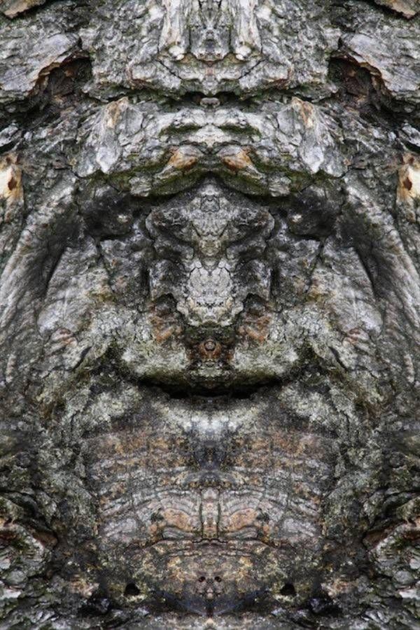 Italian photographer Elido Turco makes amazing portraits of trees using a mirrored editing technique.