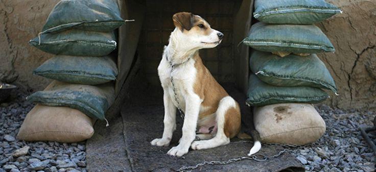 Chiens, chats, pigeons voyageurs et même vers luisants, eux aussi se sont battus, et de manière héroïque, pendant les deux guerres mondiales.