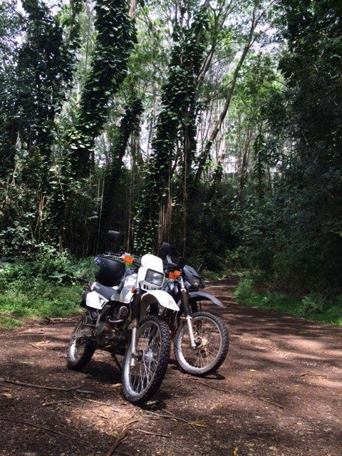 Dirtbiking through the Kauai Jungle in Hawaii. Motorcycle blog.