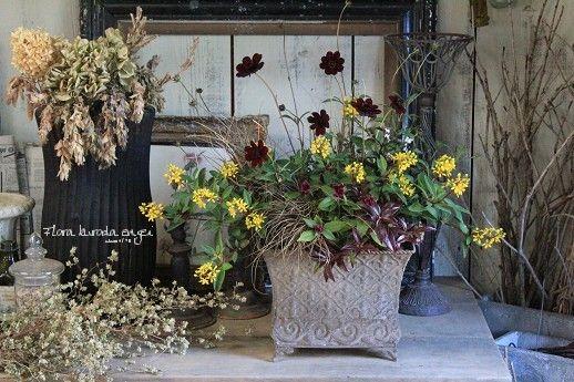 フローラのガーデニング・園芸作業日記-チョコレートコスモス ミリオンキッス 寄せ植え